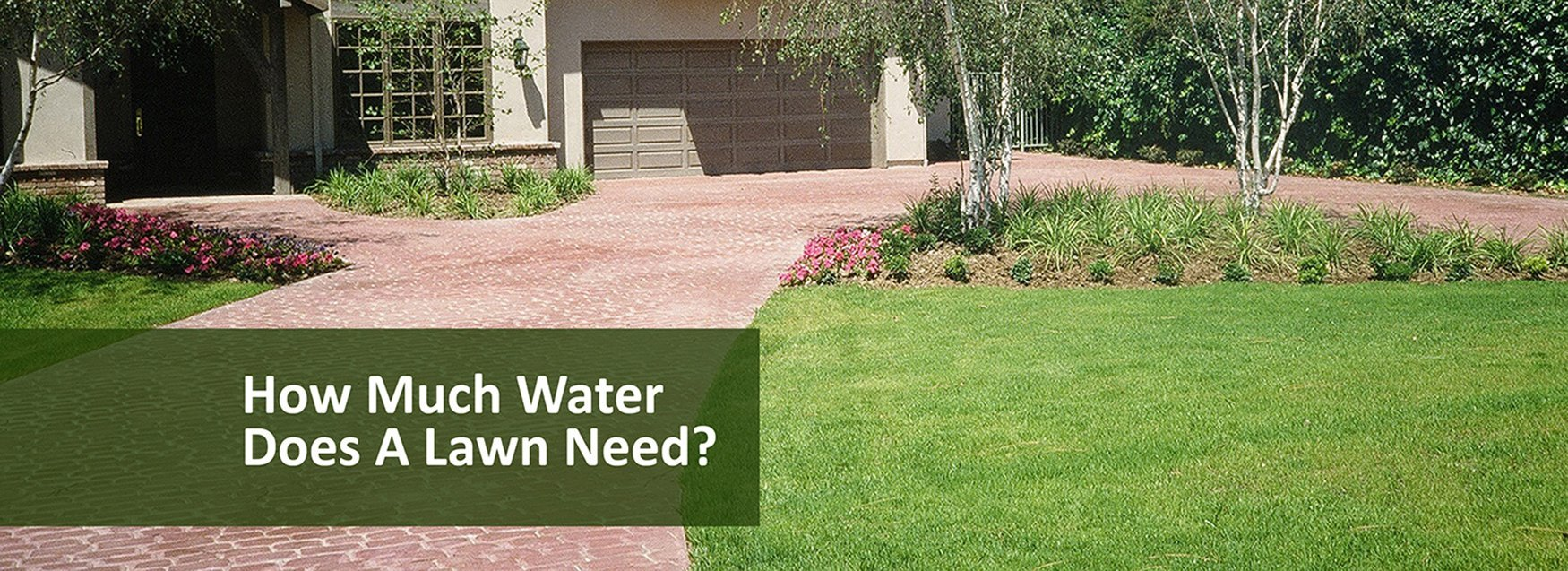 How much water does a lawn need?